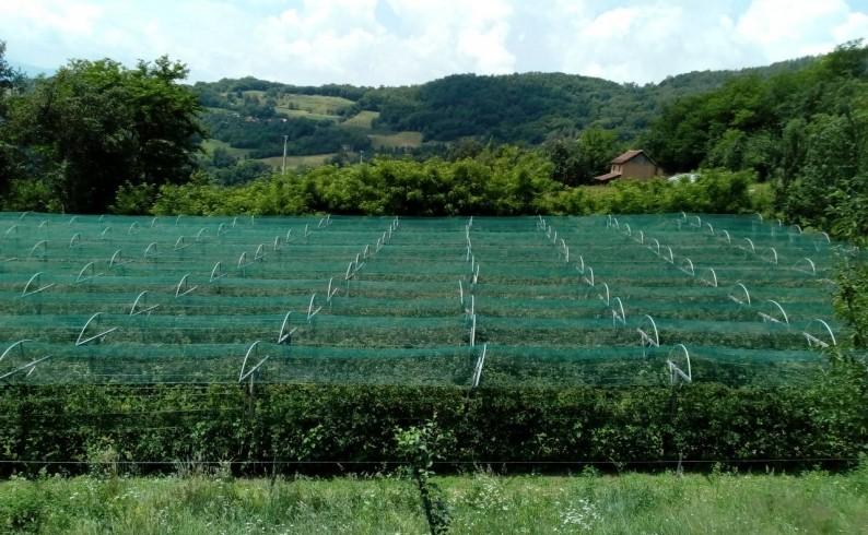 Protivgradne mreže za 37 proizvođača organske maline u Foči
