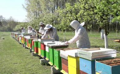 Opština pomaže pčelarima