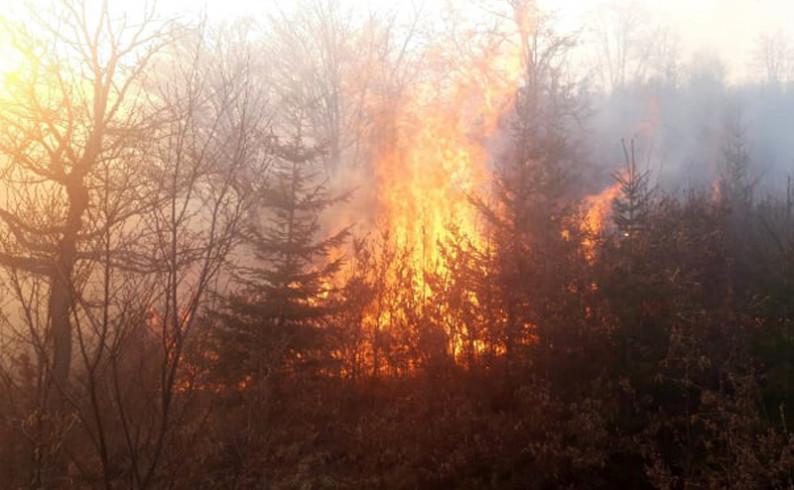 """ŠG """"Maglić"""": Savjesnim ponašanjem izbjeći šumske požare"""
