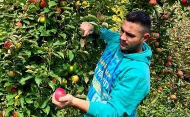 Rekordan rod jabuke u fočanskom kraju
